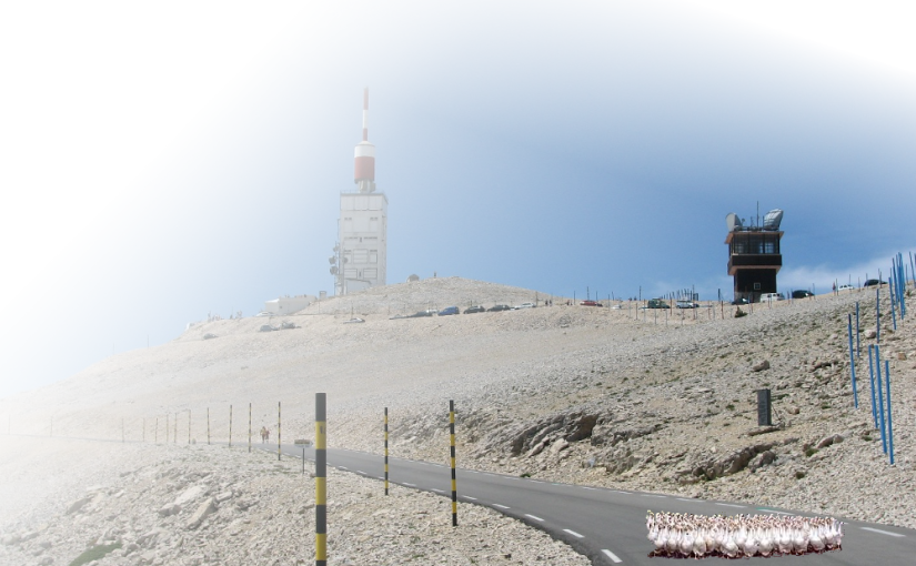 Geese Up Ventoux! this Sunday